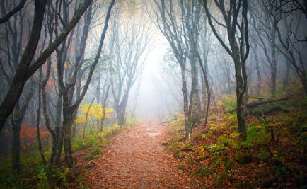 Old pathway into the forest with fog