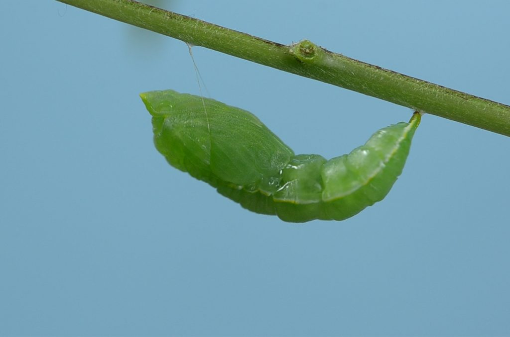 The Chrysalis of Initiation